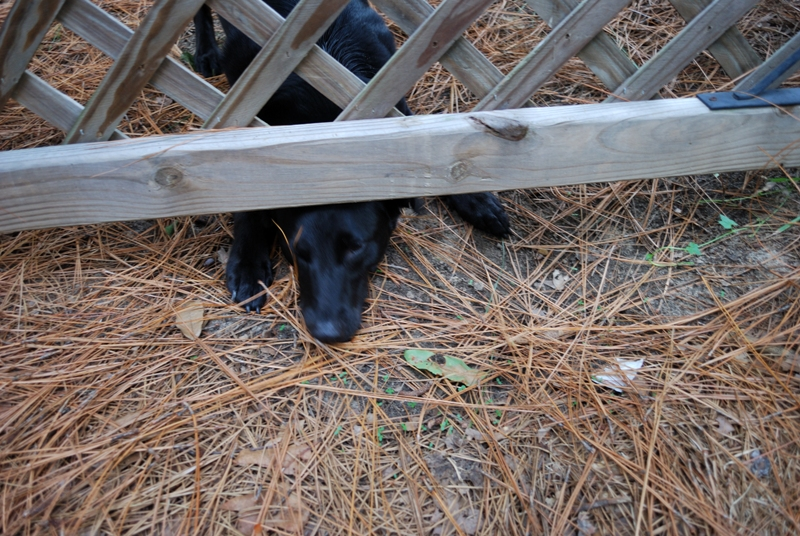 Fence Escape attempt